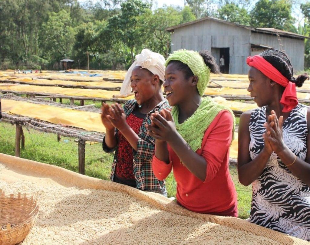 femmes en train de trier à la main les cerises de café
